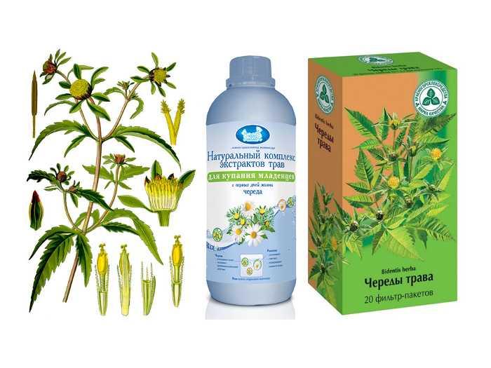 Череды трава используется как средство для купания малыша