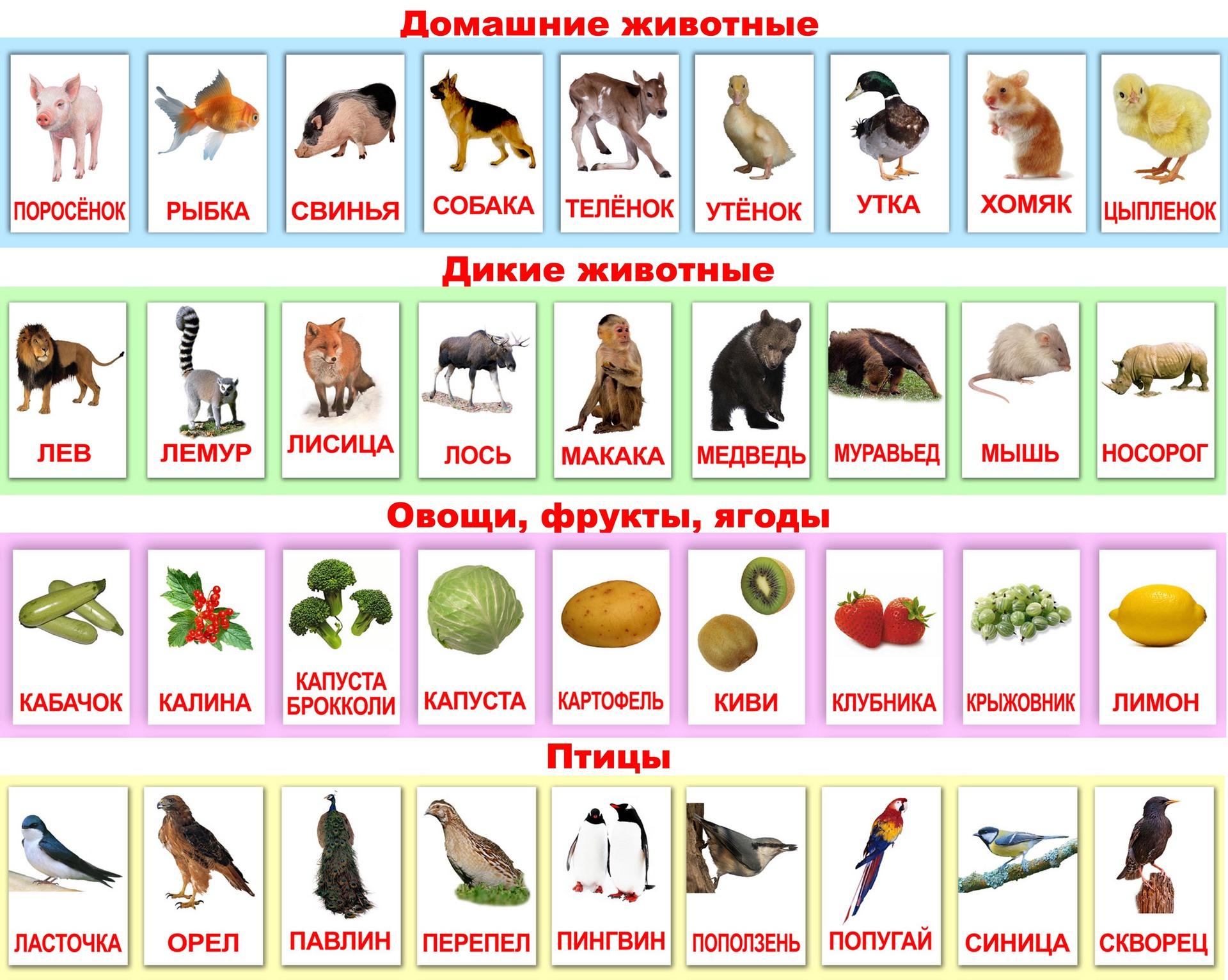 Карточки с изображением животных, овощей и птиц