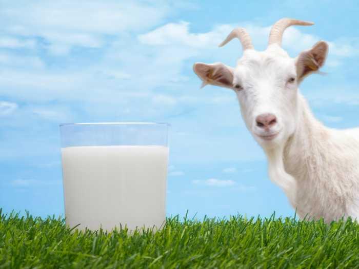 Можно ли козье молоко детям
