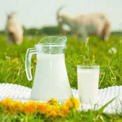 Кувшин с козьем молоком в поле