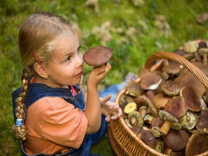 Девочка в лесу рядом с корзинкой грибов