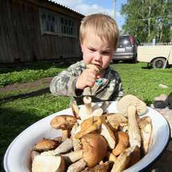 Ребенок пробует на вкус грибы