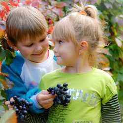 Маленькие дети собирают виноград