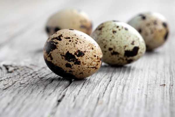 Перепелиные яйца должны быть свежими