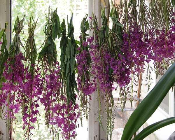 Использование разных частей растения